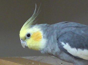 20110225-1.jpg